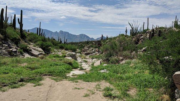 Arizona, Cactus, Southwest, Usa, Landscape, Desert