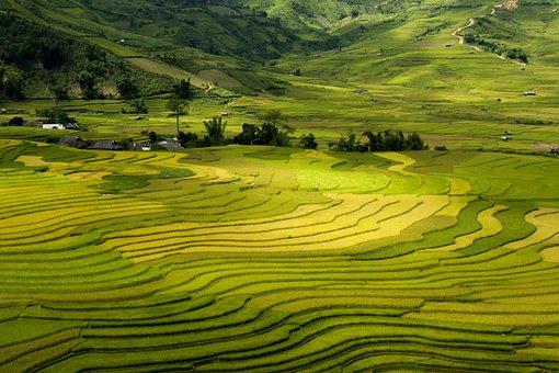 Terraces, Tay Bac, Vietnam, Sapa, Mu Cang Chai, Lao Cai