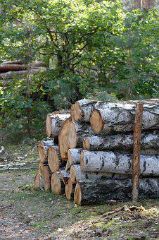 Wood, Bale, Felling, Tree, Forest, Slice, Cut, Cutting