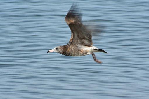 Animal, Sea, Bird, Wild Birds, Seabird, Sea Gull