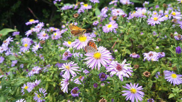 Butterfly, Flower, Purple, Nature, Insect, Animal