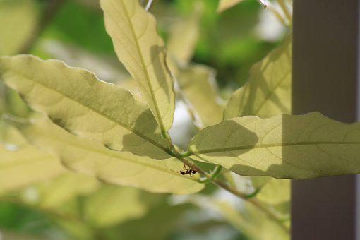Ant, Bug, Leaves, Insect, Nature