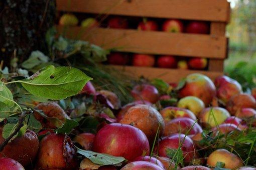 Apples, Box, Tree