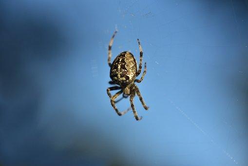 Spider, Cobweb, Arachnid, Web, Sky, Blue, Close Up