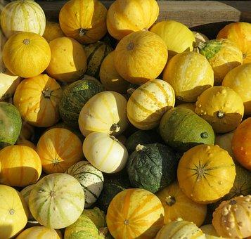 Autumn, Pumpkins, Decorative Squashes, Yellow