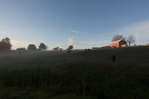 Farm, Cows, Sunrise, Barn, Pasture, Animal, Countryside