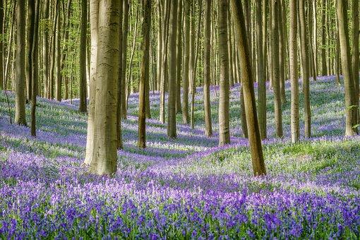 Belgium, Flower, Spring, Color, Outdoor, Nature