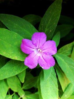 Nature, Flower, Purple, Garden, Plant, Blossom, Flora