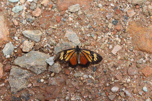 Butterfly, Close Up, Animal World, Insect, Animal, Wing
