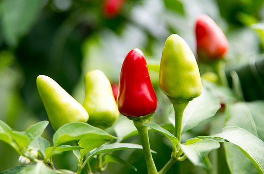 Chili, Peppers, Cooking, Food, Spices, Spicy
