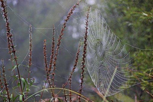 Morgentau, Cobweb, Meadow, Dewdrop, Dew, Web, Drip