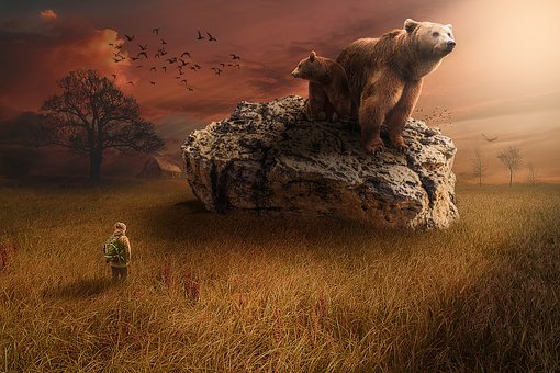 Bear, Brown, Wild, Grizzly, Big, Animal, Rock, Field
