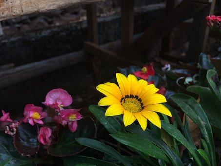 Flower Show, Yellow, Flora