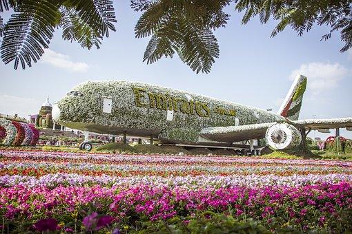 Miracle Garden Dubai, Flowers, Nature, Flower Garden