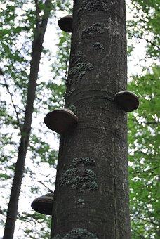 Tree, Forest, Hub