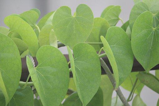 Leaves, Plant, Climber, Nature, Flora, Garden, Vine