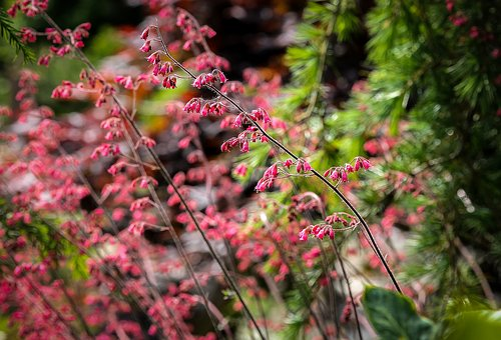 Flowers, Pink, Plant, Summer, Color, Garden