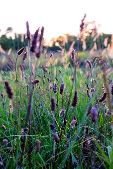 Sunset, Grass, Nature, Outdoors, Fields, Sunrise