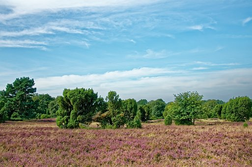 Germany, Lüneburg Heath, Heathland, Heather