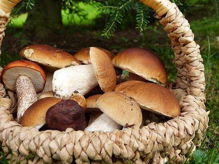 Mushrooms, Porcini Mushrooms, Maroni, Red, Basket