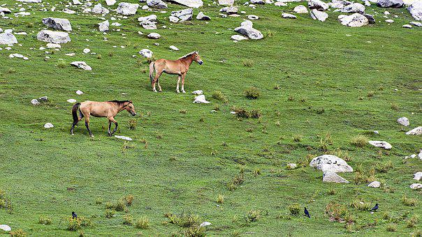 Jahanbanda, Meadows, Kumrat, Valley, Upperdir, Kpk