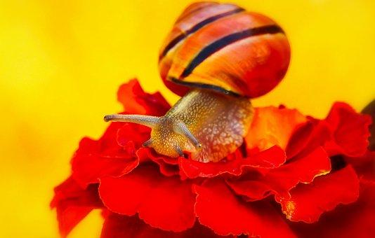 Wstężyk Huntsman, Snail, Molluscs, Flower, Animals