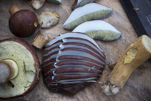 Mushrooms, Chestnut Röhling, Autumn, Mushroom, Nature