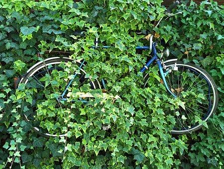 Bike, Decoration, Old, Forget, Turn Off, Nature