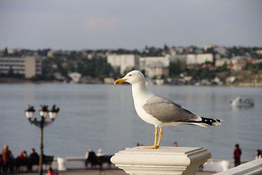 Seagull, Sea, Sky, Bird, Nature, Coast, Wings