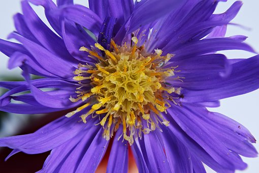 Pistil, Composites, Flower Head, Close Up, Macro