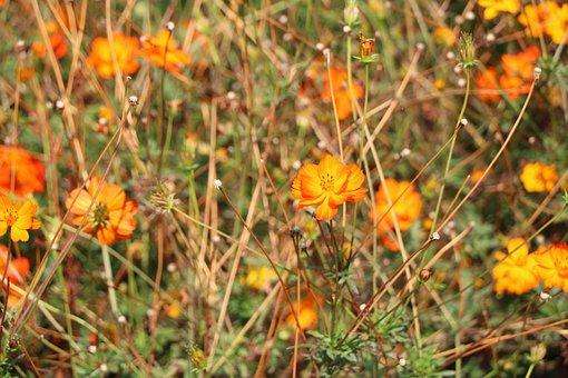 Flower, Nature, Park, Botany, Garden, Plant, Flora