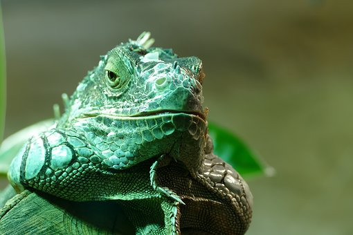 Lizard, Animal, Reptile, Scale, Terrarium, Zoo