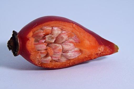 Rose Hip, Seeds, Autumn, Rosehip Seed, Macro, Close Up