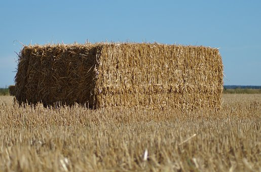 Straw Bales, Square, Pressed, Straw, Agriculture