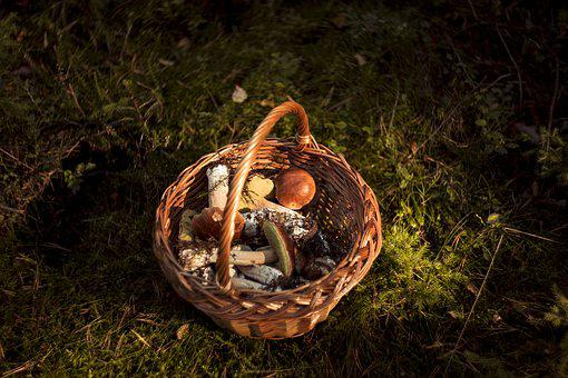 Fungus, Forest, Day, Autumn, Mushrooms, Red, Toxic, Hat