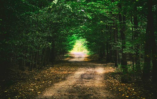 Forest, Way, Landscape, Tree, Nature, The Path, Forests