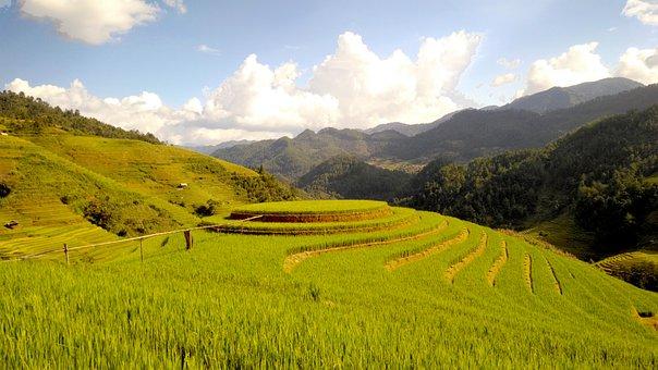 Terraces, Rice Field, Terrace, Travel, Tuorism, Visit