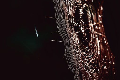 Cobweb, Networking, Spin Threads, Connected, Web, Bill