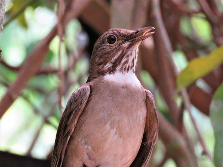 Bird, Nature, Fauna, Garden, Animal, Feathers, Beak