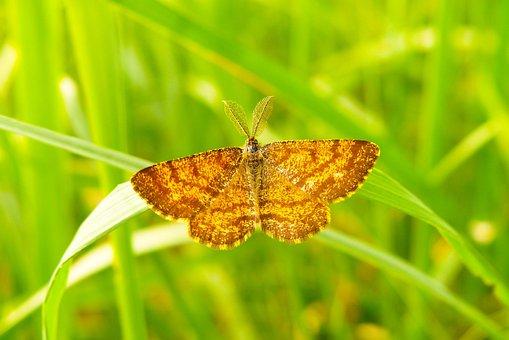 Poproch Pylinkowiak, Tom, Insect, Butterfly Day