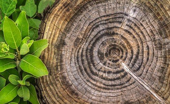 Wood, Annual Zone, Pattern, Hardwood, Circle, Log