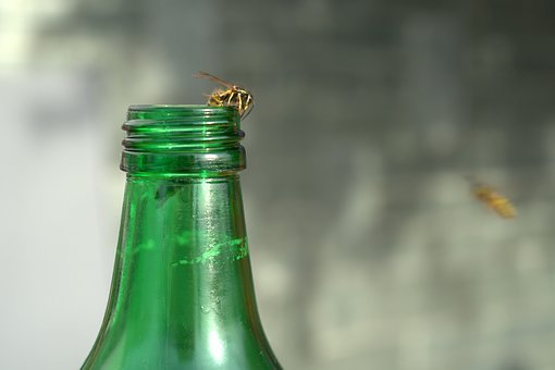 Wasp, Bottle, Summer, Drink, Liquid, Refreshment, Fresh