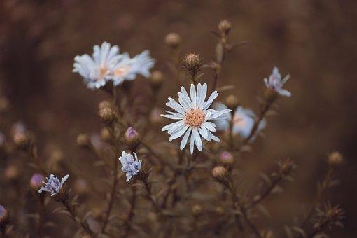 Flower, White, Blümchene, Small, Plant, Blossom, Bloom
