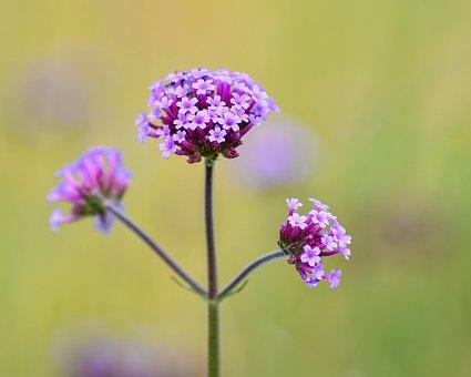 Flower, Plant, Nature, Macro