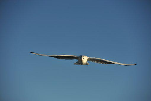 Seagull, Sky, Lake, Summer, Open, Fly, Flight, Bird
