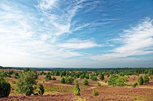 Germany, Lüneburg Heath, Heathland, Heather, Nature