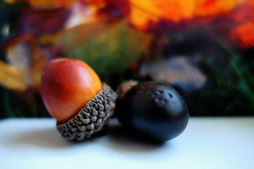 Autumn, Deco, Herbstdeko, Autumn Decoration, Decoration