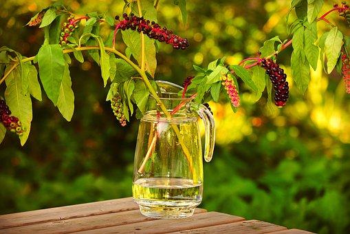 Glass Vase, Jar, Water, Flower, Stem, Leaves