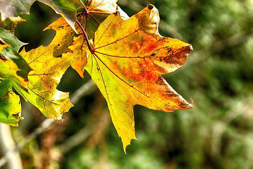 Leaf, Autumn, Fall, Leaves, Colourful