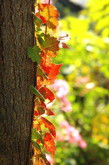 Autumn, Leaves, Landscape, Yellow Leaves, Nature